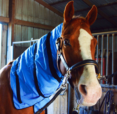 Cooling Horse Neck Wrap