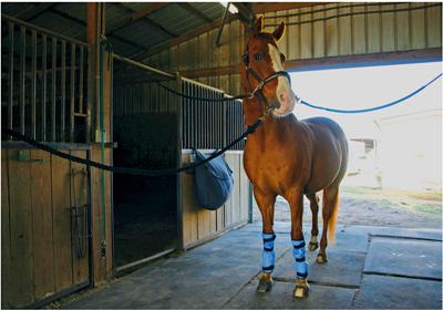 Cooling Horse Leg Wraps