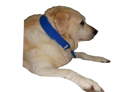 Cooling Dog Neck Band