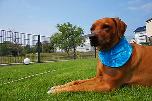 Dog Ice Cooling Bandana